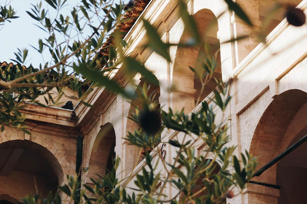 Olivenbäume. Luxusreise