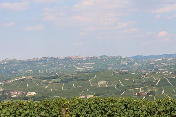 Der Weinbau dominiert die sanfte Hügellandschaft rund um Alba ©PrimoVino. Luxusreisen
