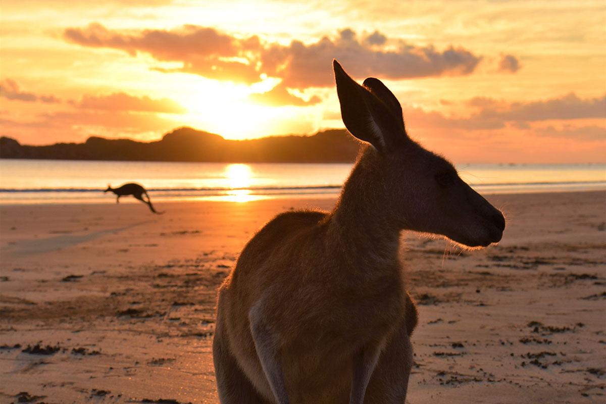 Ein spektakulärer Sonnenaufgang – finden auch zwei Dutzend Kängurus, die sich morgens am Strand treffen. Luxusreisen