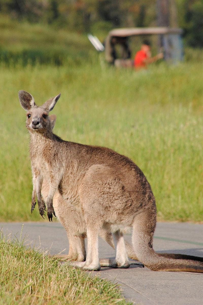 Victoria. Australien. Luxusreisen