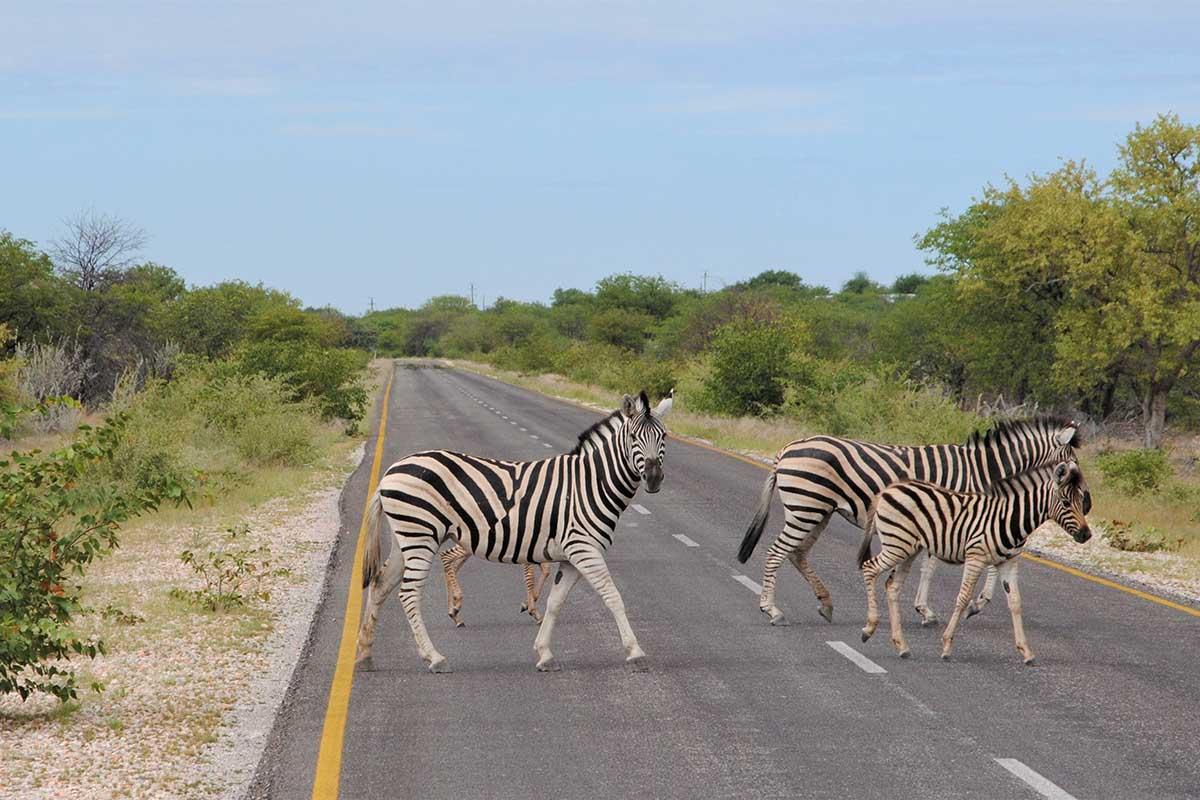 Luxusreise Namibia