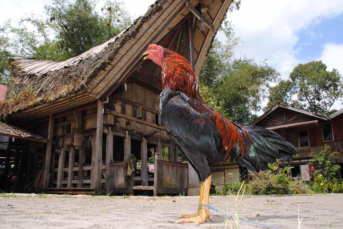 Luxusreise Sulawesi